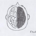 脳が白黒に分かれているイラスト