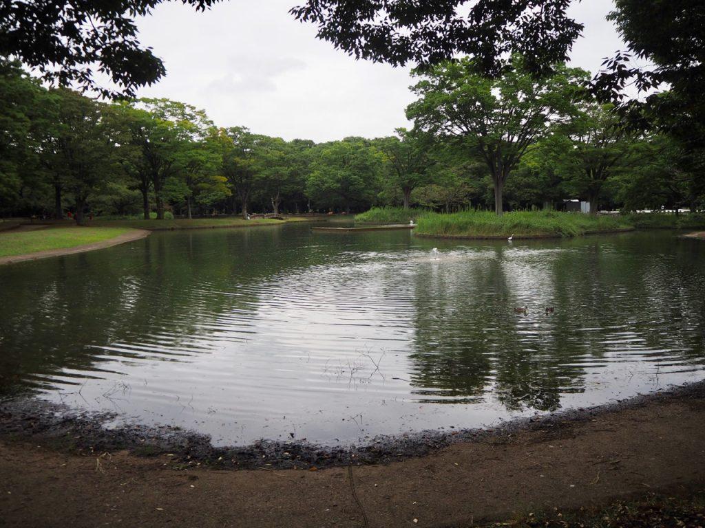 代々木公園の池